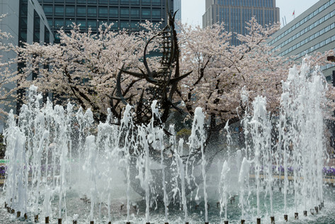 Sakura_flowering_2018_03
