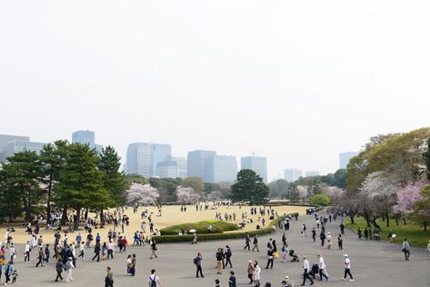 Sakura_flowering_2018_21