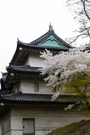 Sakura_flowering_2018_27